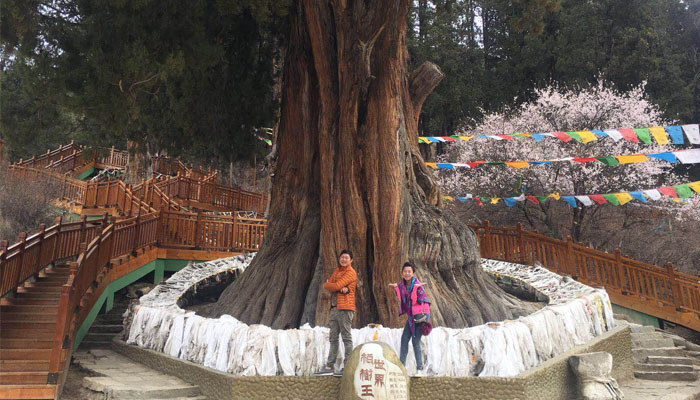 Visit to the oldest cypress tree in the world