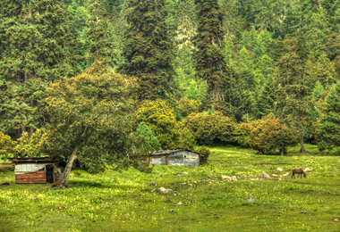 The scenery of Lulang Forest is different from other parts of Tibet.