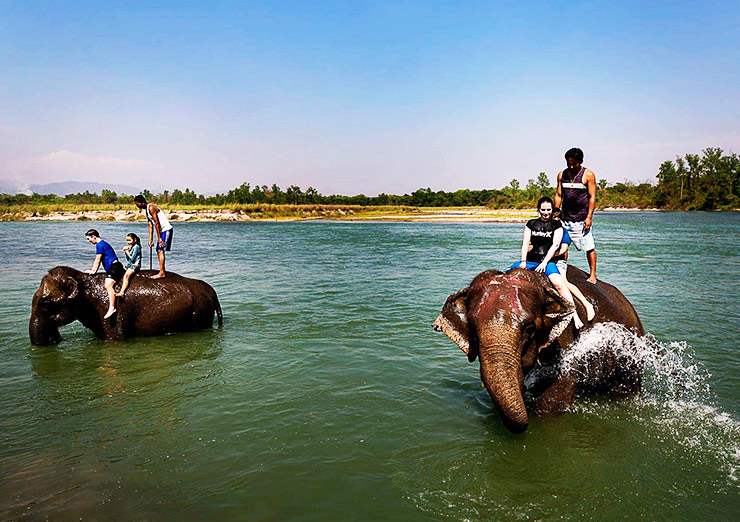 Chitwan National Park elephant bathing