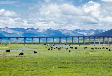 The stunning view of Qinghai-Tibet railway bridge and the Tibetan grassland